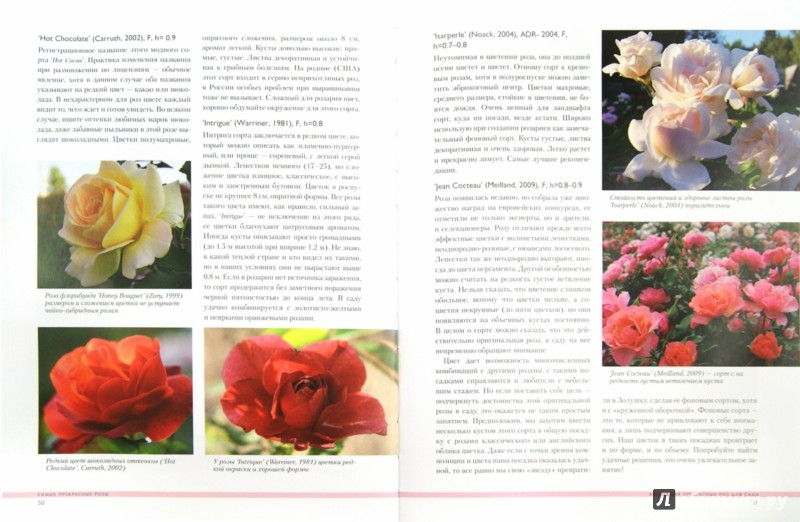 Иллюстрация 1 из 8 для Самые прекрасные розы - Галина Панкратова | Лабиринт - книги. Источник: Лабиринт