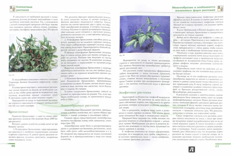 Иллюстрация 1 из 5 для Комнатные растения - Лариса Бурлуцкая | Лабиринт - книги. Источник: Лабиринт