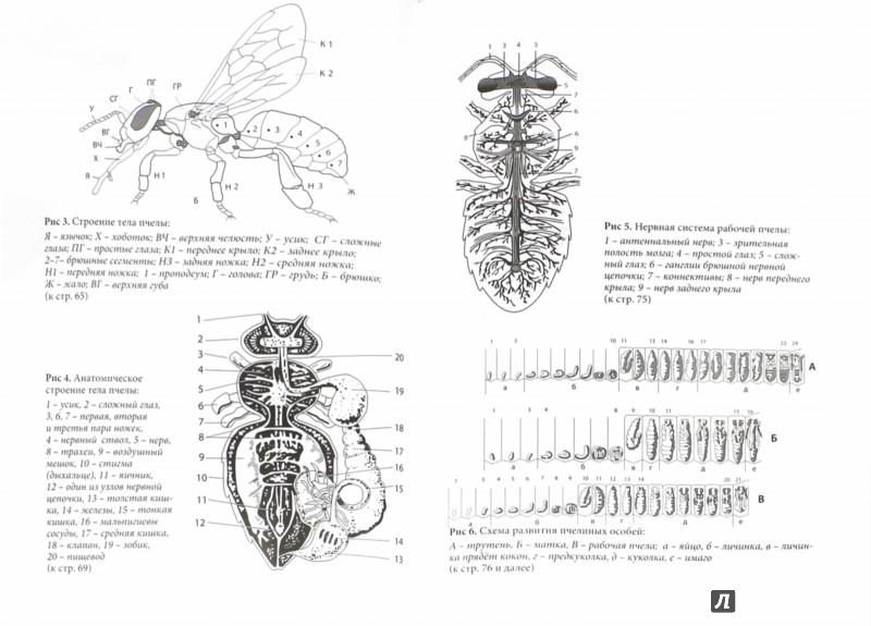 Иллюстрация 1 из 9 для Пчеловодство. Первые шаги к прибыльному хозяйству - Василий Королев | Лабиринт - книги. Источник: Лабиринт