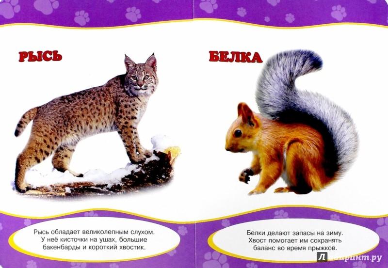 Иллюстрация 1 из 14 для Картонка. Обо всем на свете. Дикие животные | Лабиринт - книги. Источник: Лабиринт
