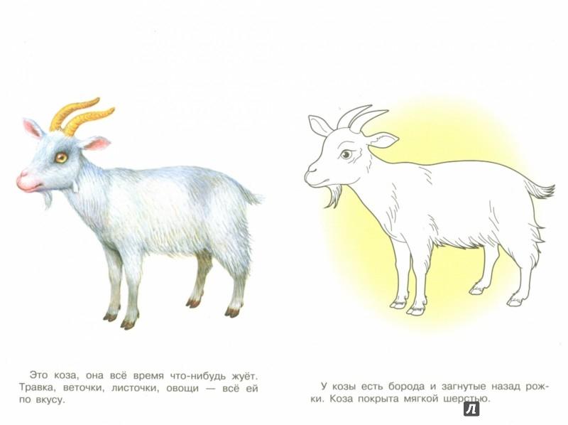 Иллюстрация 1 из 14 для Раскраска. Раскрашиваем и учимся. Домашние животные | Лабиринт - книги. Источник: Лабиринт