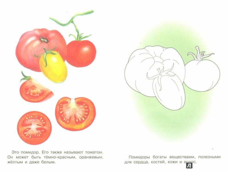 Иллюстрация 1 из 7 для Раскраска. Раскрашиваем и учимся. Овощи | Лабиринт - книги. Источник: Лабиринт