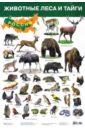 """Плакат """"Животные леса и тайги"""" (2687)"""