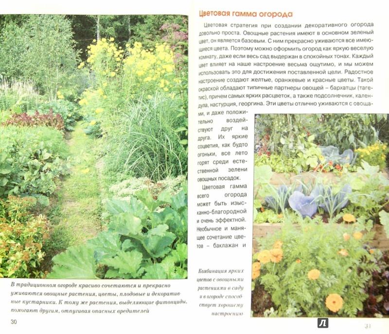 Иллюстрация 1 из 5 для Декоративный огород - Ирина Сахарова | Лабиринт - книги. Источник: Лабиринт