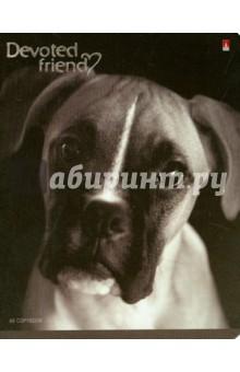 """Тетрадь общая """"Собачьи портреты"""" (48 листов, клетка, в ассортименте) (7-48-1020) Альт"""