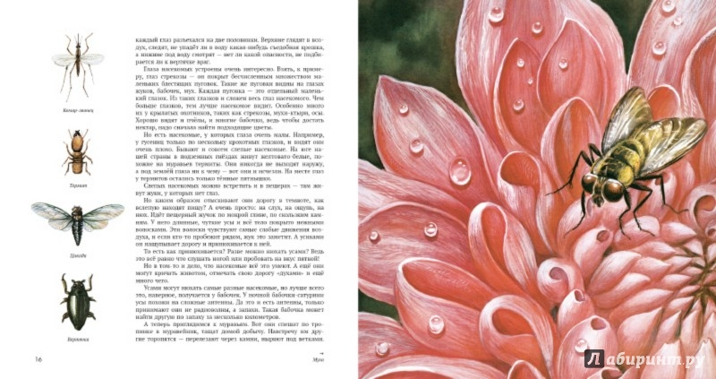 Иллюстрация 2 из 22 для Энтомология в картинках - Виталий ...: http://www.labirint.ru/screenshot/goods/482261/2/