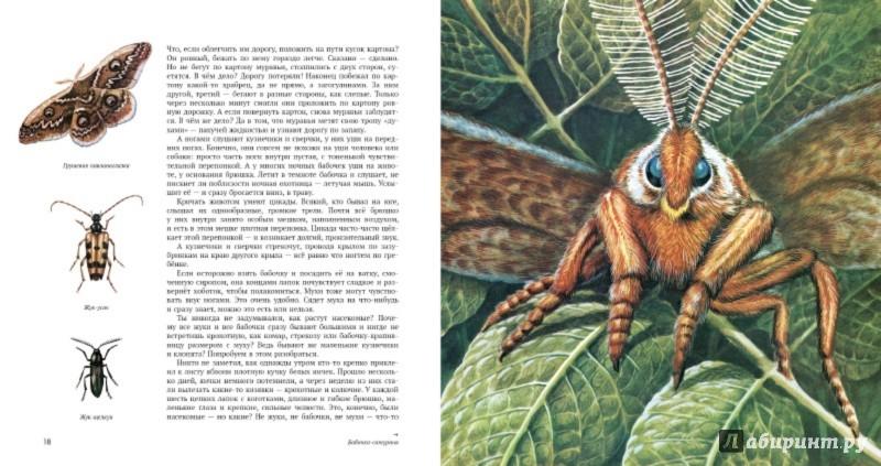 Иллюстрация 3 из 22 для Энтомология в картинках - Виталий ...: http://www.labirint.ru/screenshot/goods/482261/3/