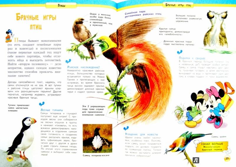 Иллюстрация 1 из 11 для Птицы | Лабиринт - книги. Источник: Лабиринт