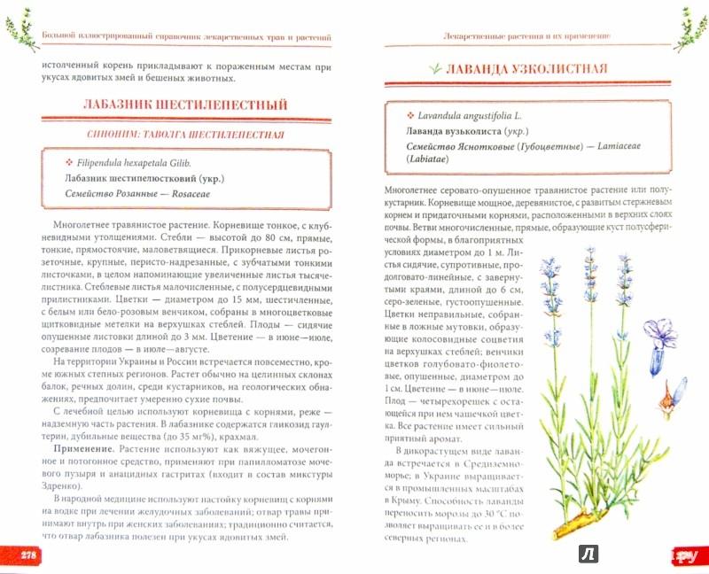 Иллюстрация 1 из 8 для Большой иллюстрированный справочник лекарственных трав и растений - Игорь Гречаный | Лабиринт - книги. Источник: Лабиринт
