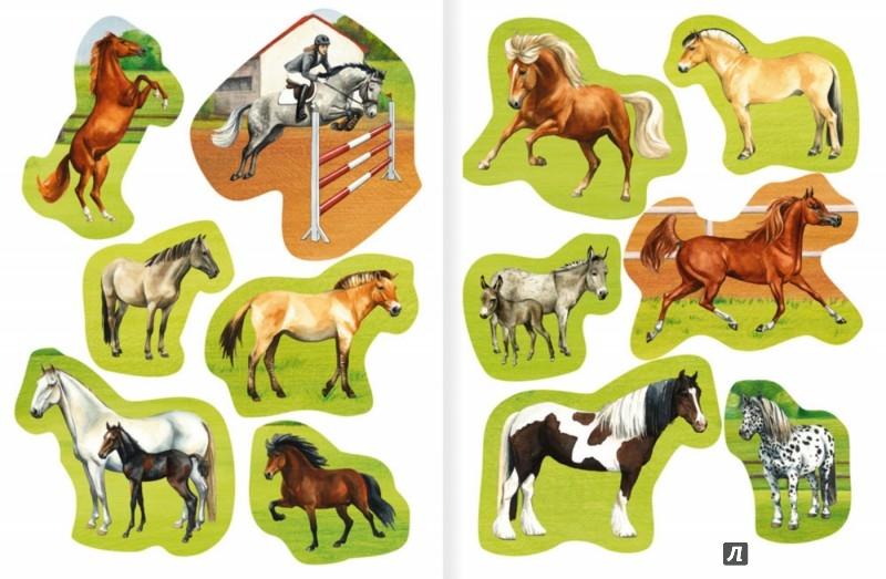 Иллюстрация 1 из 12 для Лошади и пони - Meierjurgen, Bondarenko | Лабиринт - игрушки. Источник: Лабиринт