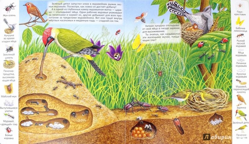 Иллюстрация 1 из 31 для Где обитают животные? | Лабиринт - книги. Источник: Лабиринт