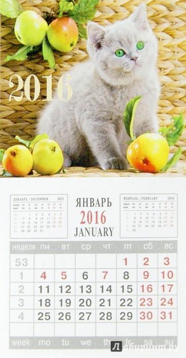 Иллюстрация 1 из 3 для Календарь на 2016 год. КОТЕНОК (на магните) (39574-24) | Лабиринт - сувениры. Источник: Лабиринт