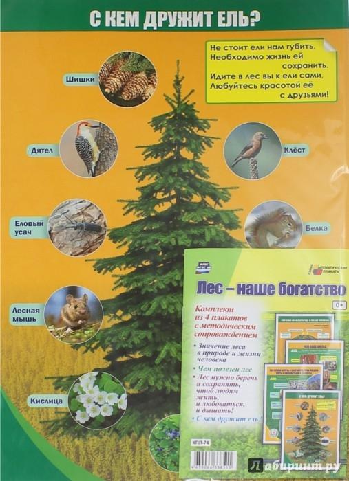 Иллюстрация 1 из 7 для Комплект плакатов. Лес - наше богатство. 4 плаката. ФГОС | Лабиринт - книги. Источник: Лабиринт