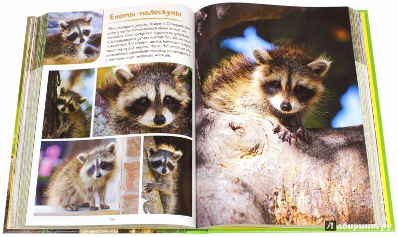 Иллюстрация 1 из 9 для Моя большая книга о детенышах животных. 1000 фотографий   Лабиринт - книги. Источник: Лабиринт
