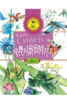 Сидел в траве кузнечикЖивотный и растительный мир<br>Книга писателя и фотохудожника Юрия Аракчеева Сидел в траве кузнечик расскажет об удивительном мире насекомых, живущих прямо у нас под ногами, в траве. И не только расскажет, но и научит любить этот мир, относиться к нему бережно. Здесь кузнечик, божья коровка, жужелица, пчелы, стрекоза, муравьи, бабочки и многие другие насекомые. Самое главное, что прочитав книгу, каждый и сам может понаблюдать за обитателями травяных джунглей. Ведь это совсем рядом с нашим домом: на дворе, в парке, на ближайшей лесной опушке.<br>Для младшего школьного возраста.<br>