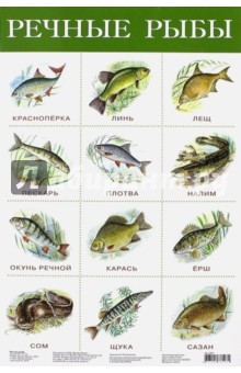 """Плакат """"Речные рыбы"""" (2165)"""