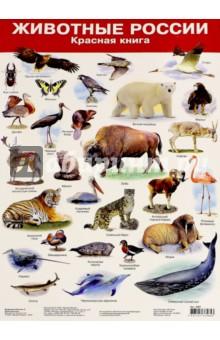 Животные России-2. Красная книга. Демонстрационный плакат (2987)