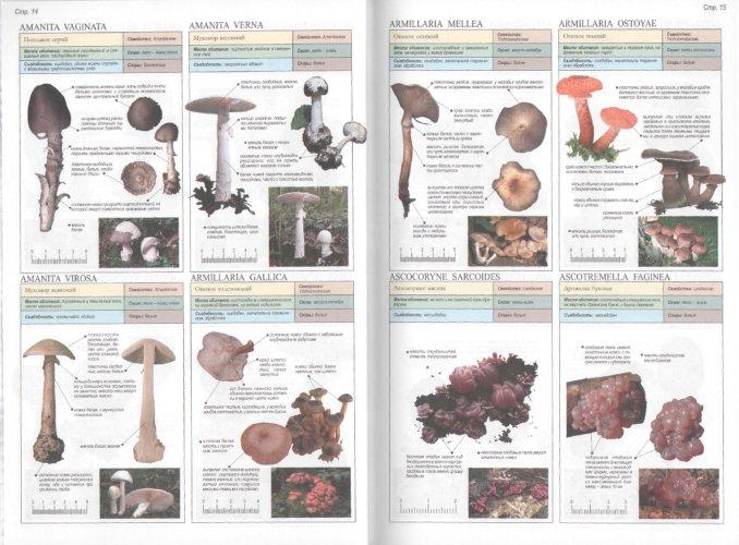 Иллюстрация 1 из 23 для Все о грибах - Пелле Янсен | Лабиринт - книги. Источник: Лабиринт