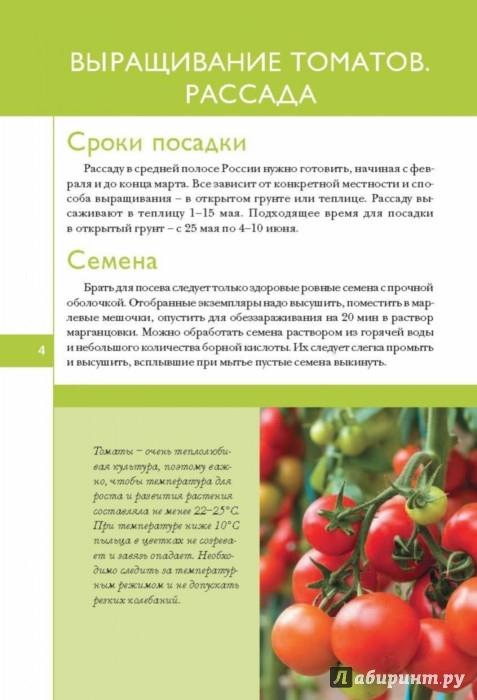 От рассады до урожая томаты 482