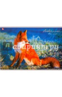 """Альбом для рисования, 40 листов """"Рыжая лисица"""" (А401338) Эксмо-Канц"""
