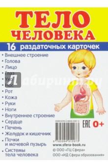 """Раздаточные карточки """"Тело человека"""""""