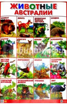 """Плакат """"Животные Австралии"""" (550х770)"""