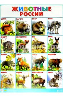 """Плакат """"Животные России"""" (555х774)"""