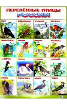 """Плакат """"Перелетные птицы России"""" (550х770)"""