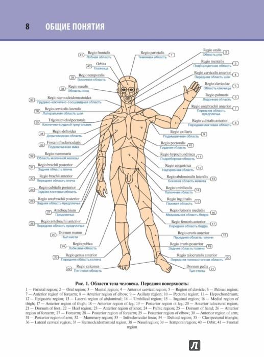 Анатомия Михайлов