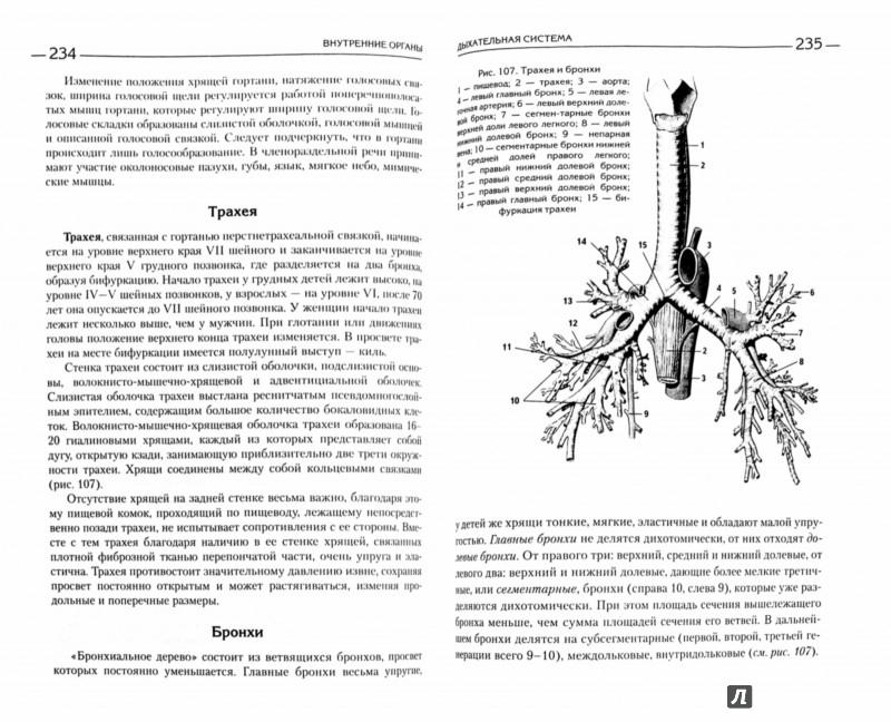Анатомия сравнительная