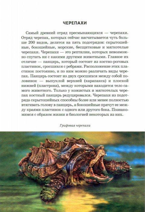 Иллюстрация 1 из 20 для Рептилии - Андрей Руденко | Лабиринт - книги. Источник: Лабиринт