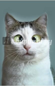Блокнот Кот-трудоголик (нелинованный, 32 листа, А5)Блокноты большие нелинованные<br>Смешной кот с огромными глазами на фото-обложке. Удобный формат А5 и упаковка в индивидуальные пакетики, давно успешно зарекомендовали себя на рынке. Внутри 64 чистых офсетных страницы.<br>