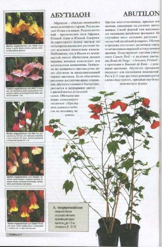 Иллюстрация 1 из 31 для Все о ста самых популярных комнатных растениях - Неер Ян Ван дер | Лабиринт - книги. Источник: Лабиринт