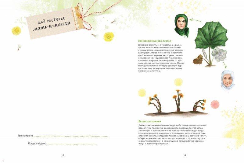 Мой гербарий. Цветы и травы - Васильева Анна - Издательство Альфа-книга fa763e5c2f2