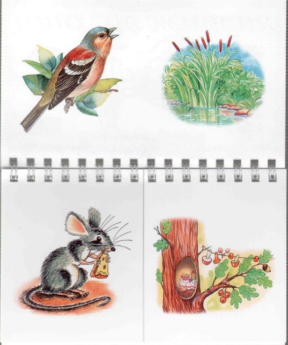 Иллюстрация 1 из 11 для Кто где живет? | Лабиринт - книги. Источник: Лабиринт