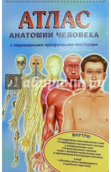 Атлас анатомии человека с перекидными прозрачными постерами (малый)