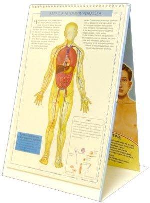 Иллюстрация 1 из 16 для Атлас анатомии человека с перекидными прозрачными постерами (малый) - Ганьон, Мерсеро | Лабиринт - книги. Источник: Лабиринт