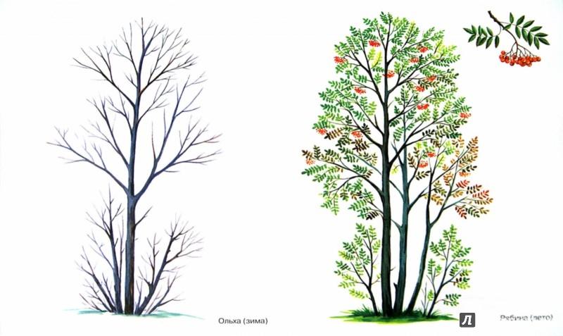 знакомство с окружающим миром и развитие речи деревья в картинках