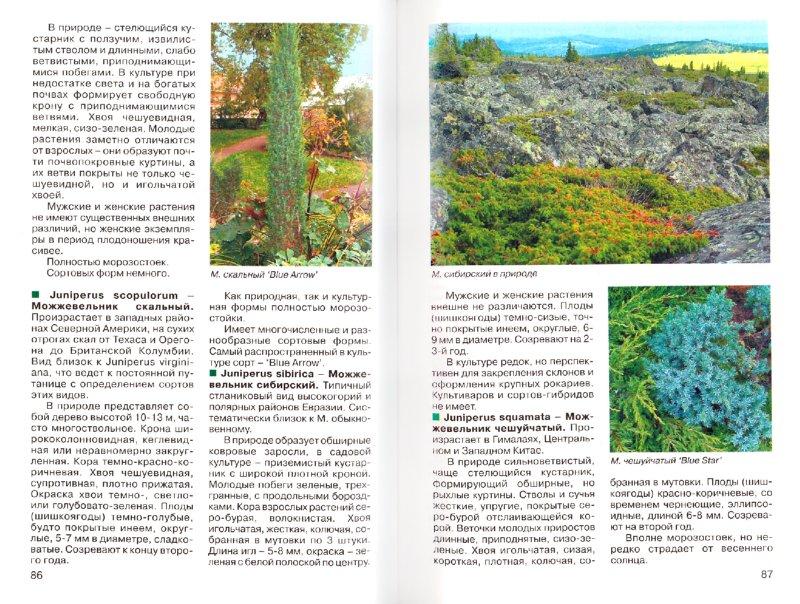 Иллюстрация 1 из 14 для Лучшие хвойные растения в дизайне сада - Юрий Марковский | Лабиринт - книги. Источник: Лабиринт