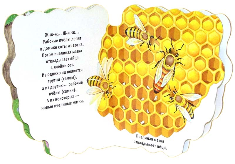 Иллюстрация 1 из 2 для Пчелиный домик. Домики для зверят | Лабиринт - книги. Источник: Лабиринт