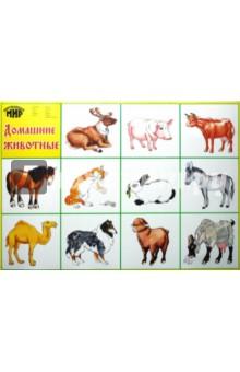 Плакат Домашние животные (50х70 см)
