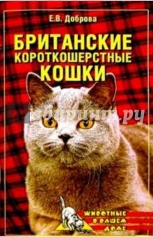Британские короткошерстные кошки - Елена Доброва
