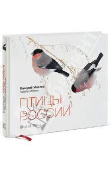 Птицы России - Валерий Малеев