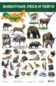 Плакат Животные леса и тайги (2687)