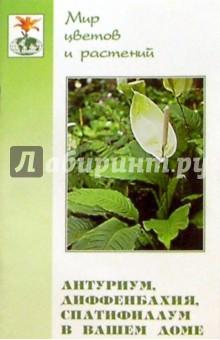 Антуриум, диффенбахия, спатифиллум в вашем доме - Лидия Ломакина