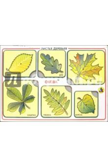 Художественные рамки-вкладыши: Листья деревьев