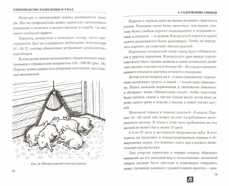 Иллюстрация 1 из 11 для Свиноводство. Разведение и уход - Татьяна Утенкова | Лабиринт - книги. Источник: Лабиринт