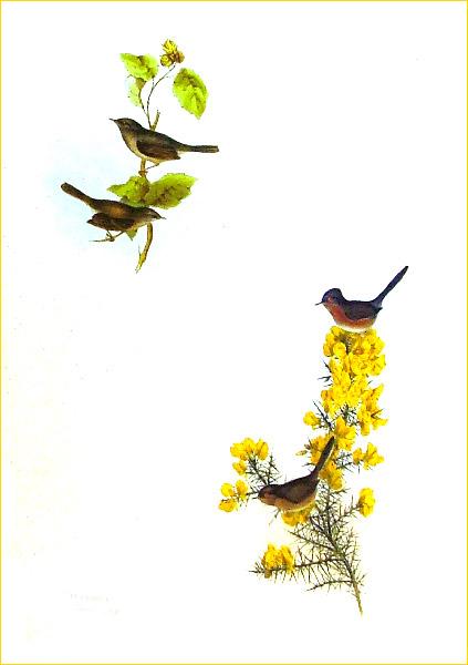 Иллюстрация 1 из 39 для Птицы Европы (в футляре) - Джон Гульд | Лабиринт - книги. Источник: Лабиринт