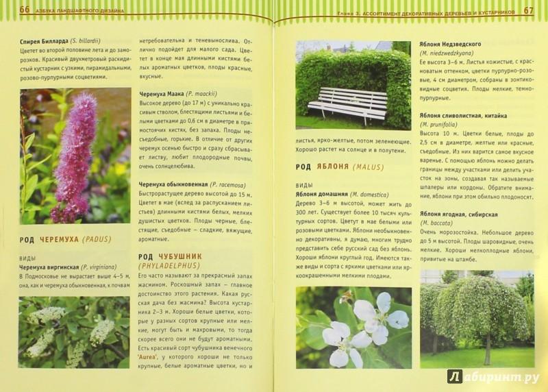 Иллюстрация 1 из 38 для Азбука ландшафтного дизайна - Татьяна Шиканян | Лабиринт - книги. Источник: Лабиринт