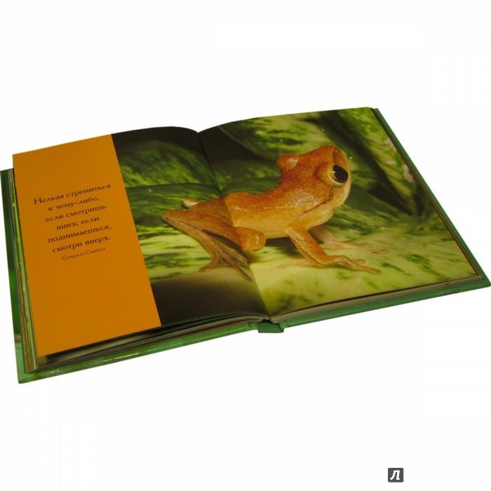 Иллюстрация 8 из 11 для Быть зелёным нелегко! - Сан Хо | Лабиринт - книги. Источник: Лабиринт